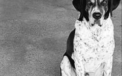 Baldo è in cerca di adozione: aiutiamolo!