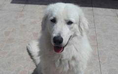 Appello per adozione: Max cerca casa, aiutiamolo!
