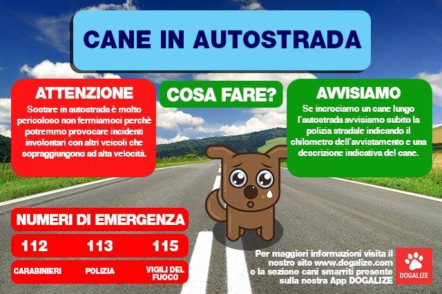 Infografica: cane in autostrada, ecco cosa fare