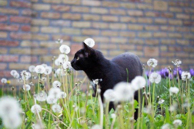 Volevo un gatto nero: il testo della canzone