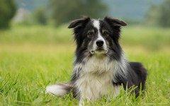Problemas de hígado en perros mayores: alarma silenciosa