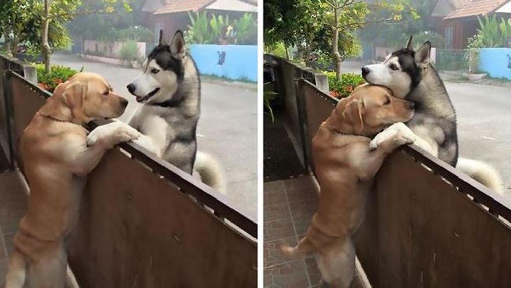 Cane scappa per abbracciare l'amico: la storia di Messy e Audi
