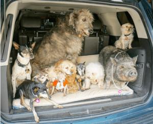 adotta cani che nessuno vuole