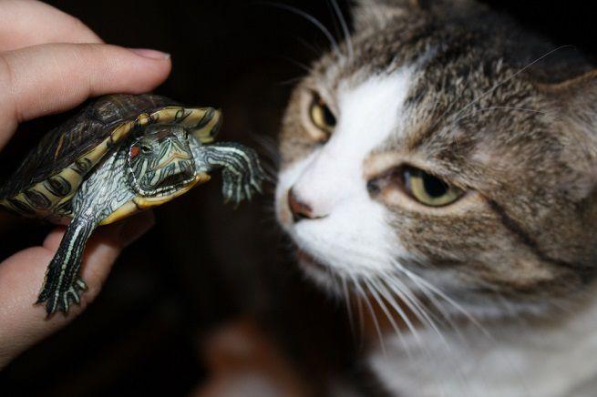 cani gatti e tartarughe
