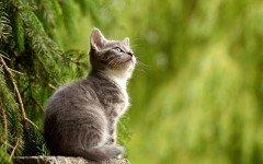 soffio cardiaco nel gatto
