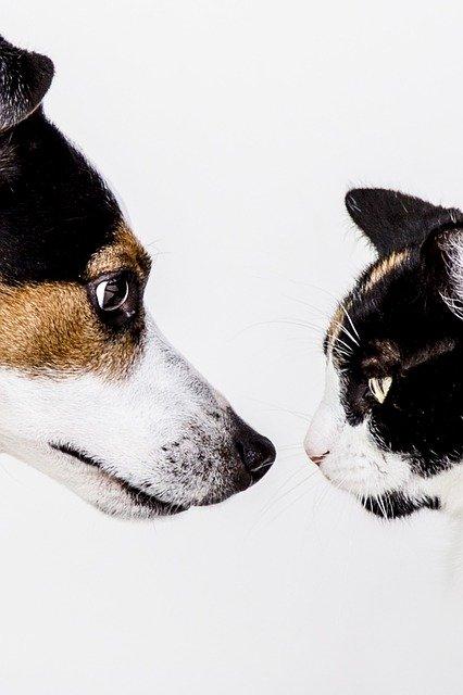 Ciclosporina nei cani e gatti: gli effetti collaterali