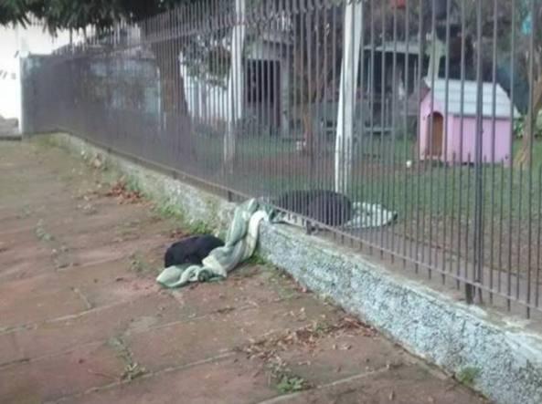 cane condivide la coperta con un randagio