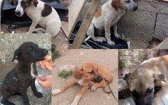 Appello per adozione: cinque sfortunati cuccioli cercano casa