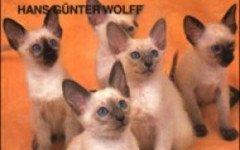 curare il gatto con l' omeopatia