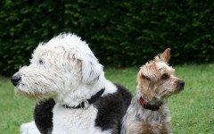 I cani percepiscono la nostra paura: cosa non fare