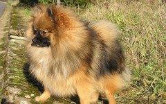 Cura del mantello del cane: i consigli per un pelo sempre curato