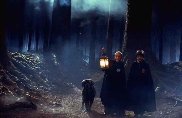 Raza del perro de Hagrid: un amigable mago y un leal can