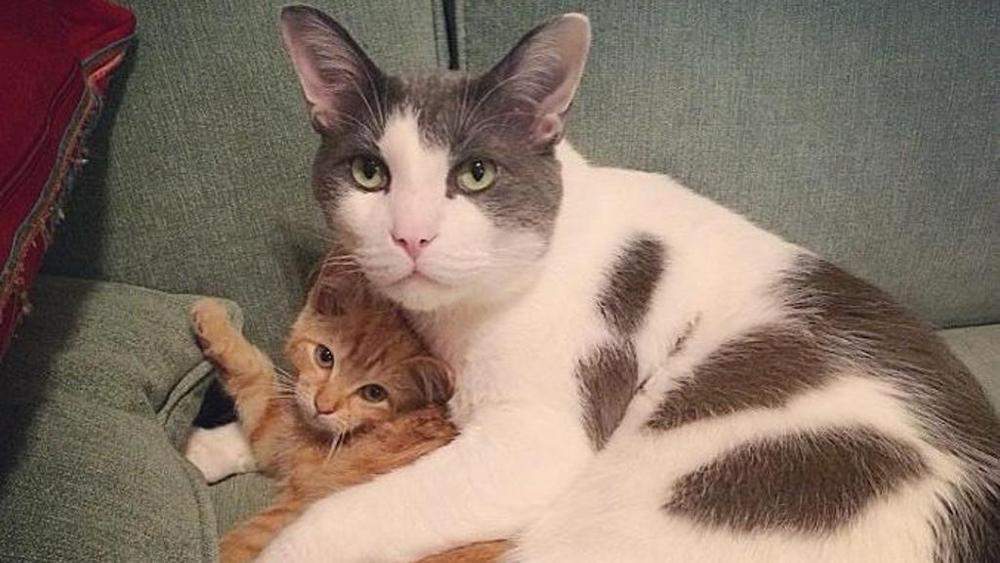 Charlie, il papà gatto che si è preso cura di 25 gatti in difficoltà