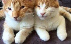 gattini ciechi