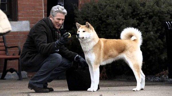 Raza del perro de la película Siempre a tu Lado
