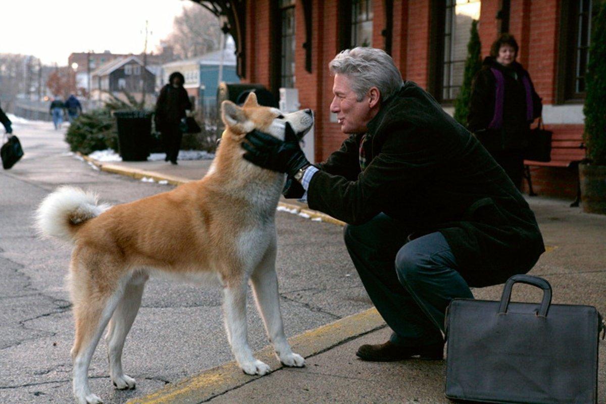 Raza del perro de la película Hachiko: una historia emotiva