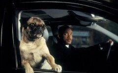 El perro de Men in Black: ¿sabes cuál es?