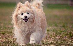 La raza de perro más bonita del mundo: ¿cuál de todas?