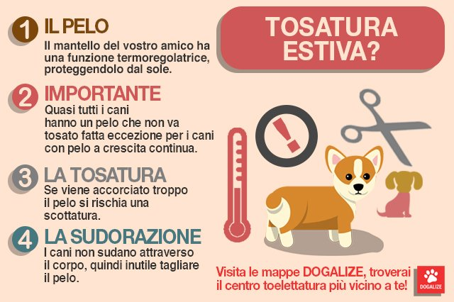 Infografica: la tosatura del cane in estate è corretta o no?
