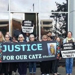uccisione di 21 gatti