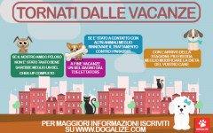 Cani e gatti tornati dalle vacanze: che fare?