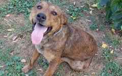Appello per adozione: Kora cerca casa