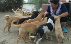 Compra un terreno per adottare 54 cani