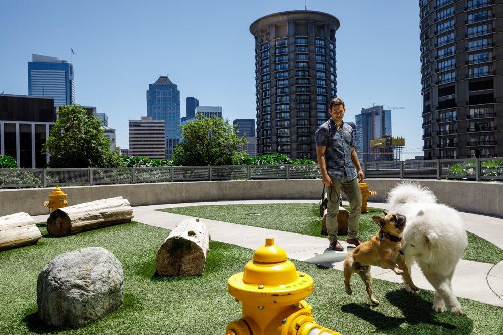 Amazon, il nuovo campus che omaggia il cane Rufus