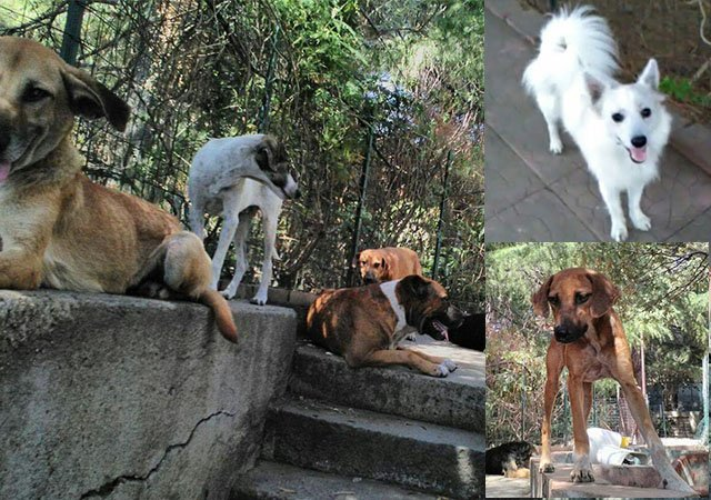 Cuccioli e altri pelosi cercano casa appello per adozione