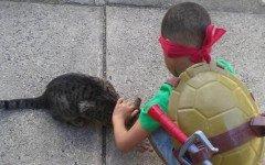bambino salva gatti