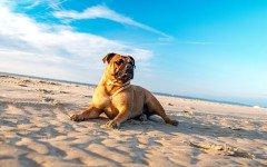 Cane al mare: 10 cose a cui fare attenzione