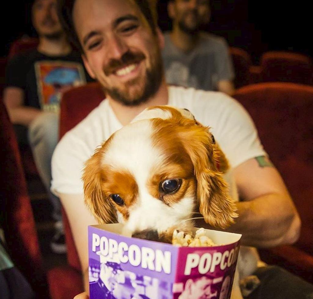 Cane al cinema: a Londra aperto cinema dogfriendly