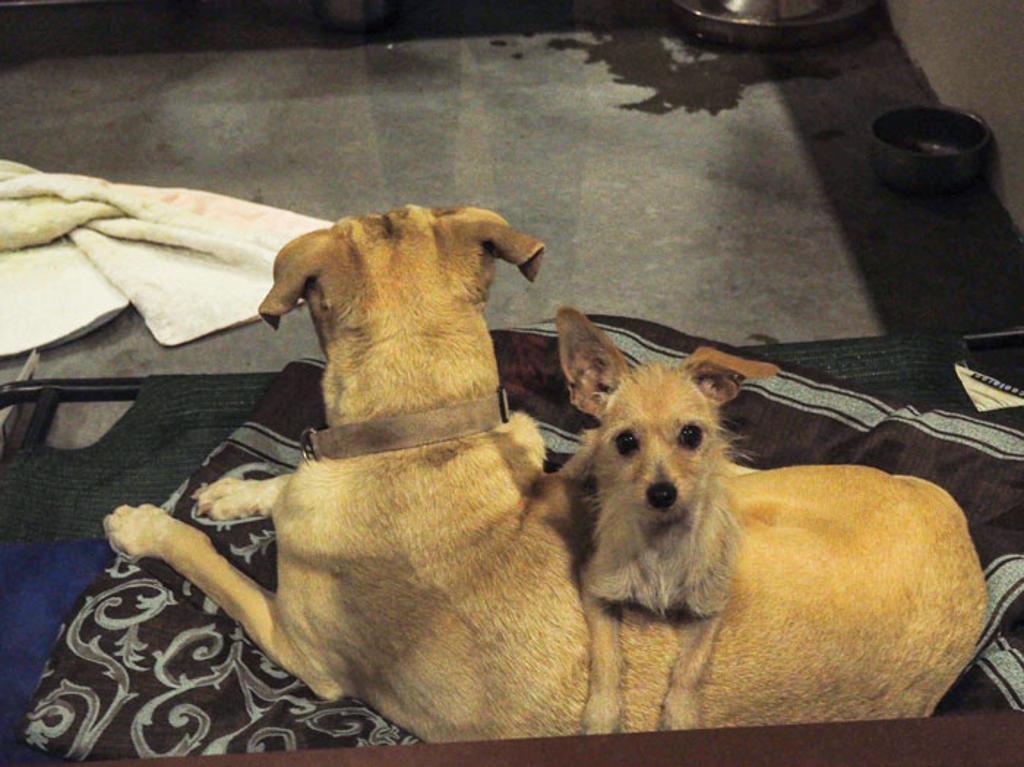 Cane non si separa dall'amico con cui vive in canile