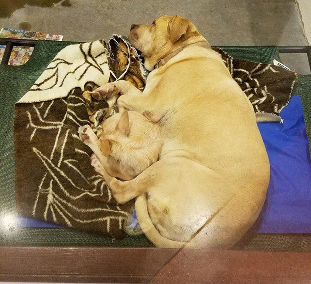 Bonnie e Clyde: la storia di due amici cani inseparabili