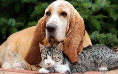 Miami vieta la vendita di cani e gatti di allevamento