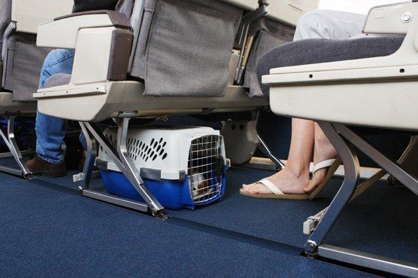 Volare con cani e gatti: è possibile portare i pelosi in aereo?