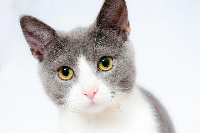 cat repellents