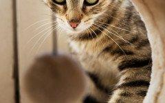 Come arricchire l'ambiente del gatto, consigli pratici