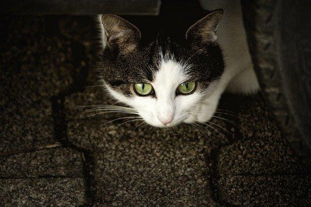 gatto veglia padrone morto