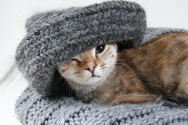 5 errori commessi dai proprietari di gatti