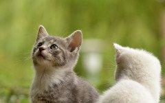 I gatti hanno il sesto senso? Scopriamolo insieme!