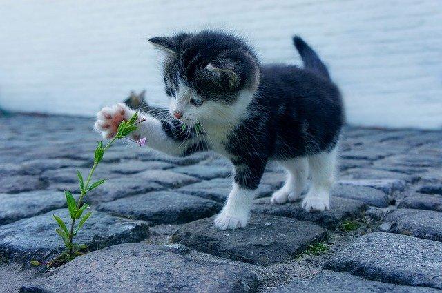 8 agosto, Giornata Internazionale del gatto