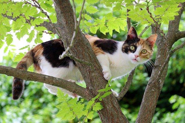 Il gatto va via di casa: quali sono le cause e cosa fare