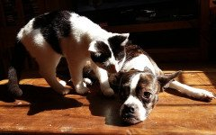 Proteggere cani e gatti dal caldo: i consigli