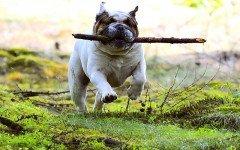 Le 19 razze di cani che imparano meno velocemente i comandi