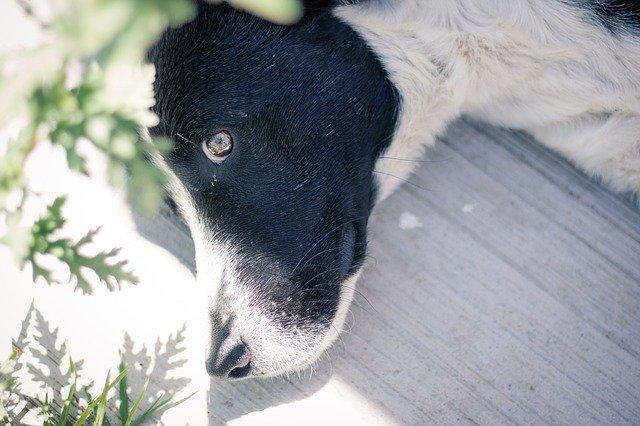 ¿ Cómo quitar el olor a pis de perro ?