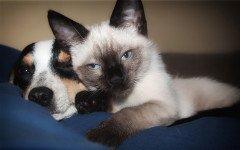 avvocato per cani e gatti