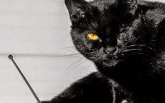 El gato sobre el tejado de zinc: una obra teatral llevada al cine