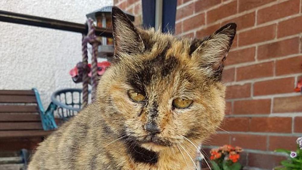 gatto più vecchio del mondo