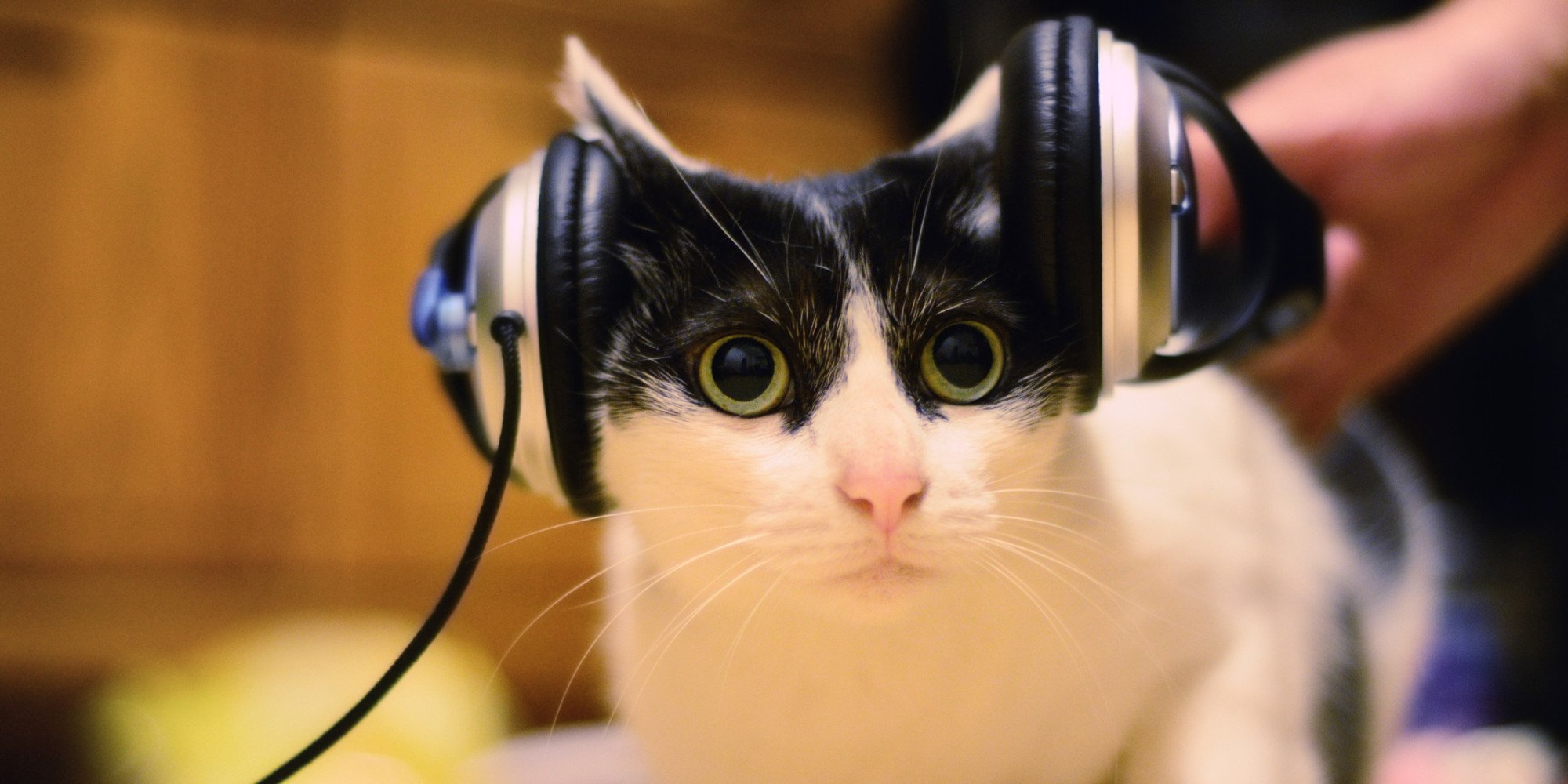 persian cat room guardian